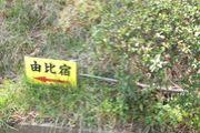 ほし〜の♡ゆい桜えび館