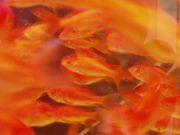 姫川熱帯魚センター