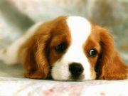犬・いぬ・DOG