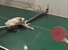 東板橋体育館 卓球練習会