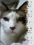 スノーシューっていい猫です。
