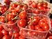 イタリアの最高級トマト缶
