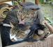 猫サーファー
