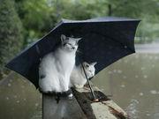 傘が好き!