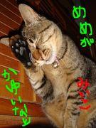 愛猫の名前が「みいこ」