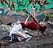 踊るVn=Lindsey Stirling