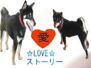愛犬LOVEストーリー