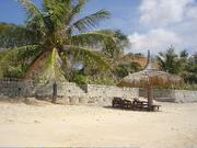 ココナッツヤシの木