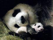 ☆ パンダの会 ☆