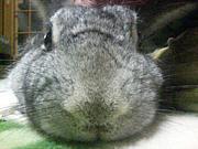 ブサ可愛いウサギを愛する場