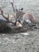 鹿と私の24時間
