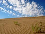砂漠の中の一粒