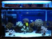 I Love 海水魚&サンゴ