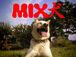 ミックス犬★LOVE★