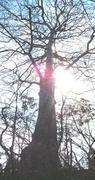 ただ木を見る