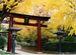 根津神社が好き