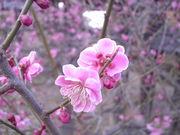 心を打つ、美しい日本語。