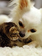 犬彼氏と猫彼女