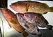 日本海の船釣り (関西版)