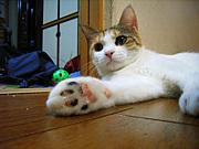 握手しよう!!