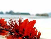 てぃんさぐの花