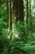 Rain Forest...