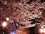 大人の呑みin神奈川