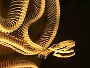 骨格標本&頭骨