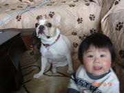 犬とベビーは兄弟です☆
