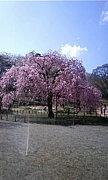 ☆三ツ池公園でお散歩☆
