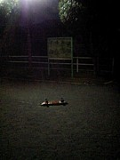 ひとりぼっちのスケートボード