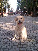「スワレ」で犬のおしりに念じる