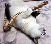 ギター弾きますか?