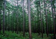 北海道林業