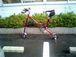 EXWALKER(17BICYCLE)