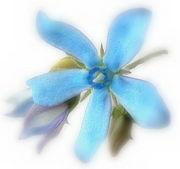 花言葉と誕生花