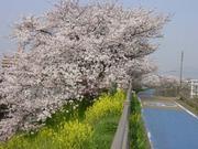 草津と琵琶湖を愛する会