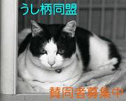 うし柄猫同盟