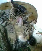 腕枕 Love  (GAY ONLY)