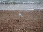 Brighton Eurocentres 2005