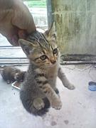 沖縄猫ンチュ!西表野良猫