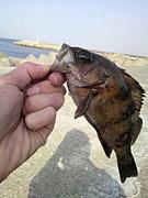 釣りで友達増やそうじぇい