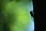 一年中、蝉に鳴いていて欲しい