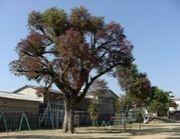 柳川市立城内小学校