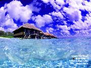 ハワイを愛する人達の会