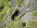 ツキノワグマ-Black Bear-
