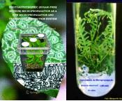 Micropropagation&植物組織培養