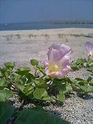 Oita Beach Clean