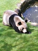 パンダ好き!