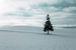 クリスマスツリーを撮ってアップ
